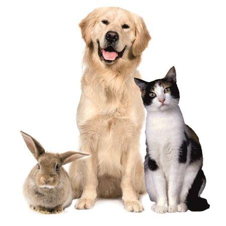 Изображение для категории Для животных